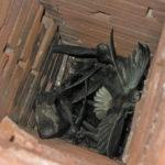 Chimney swifts & chimney repair in Mclean VA